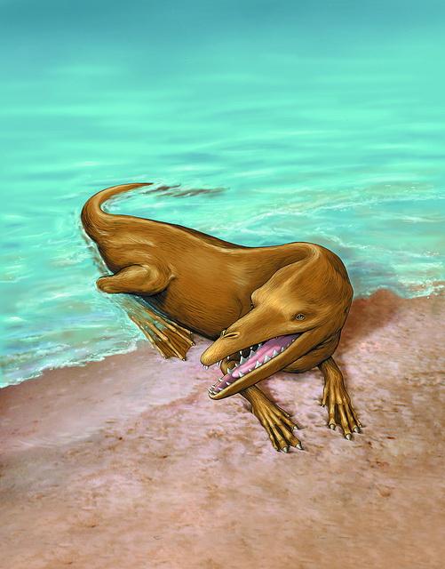 В Перу найдены остатки древнего четвероногого кита
