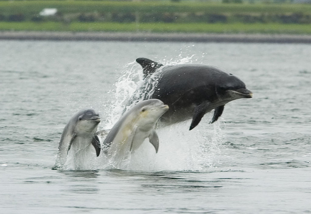 a description of the bottlenose dolphin and its abilities